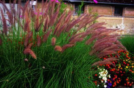 Duthoit horticulture production et vente de plantes for Recherche plante