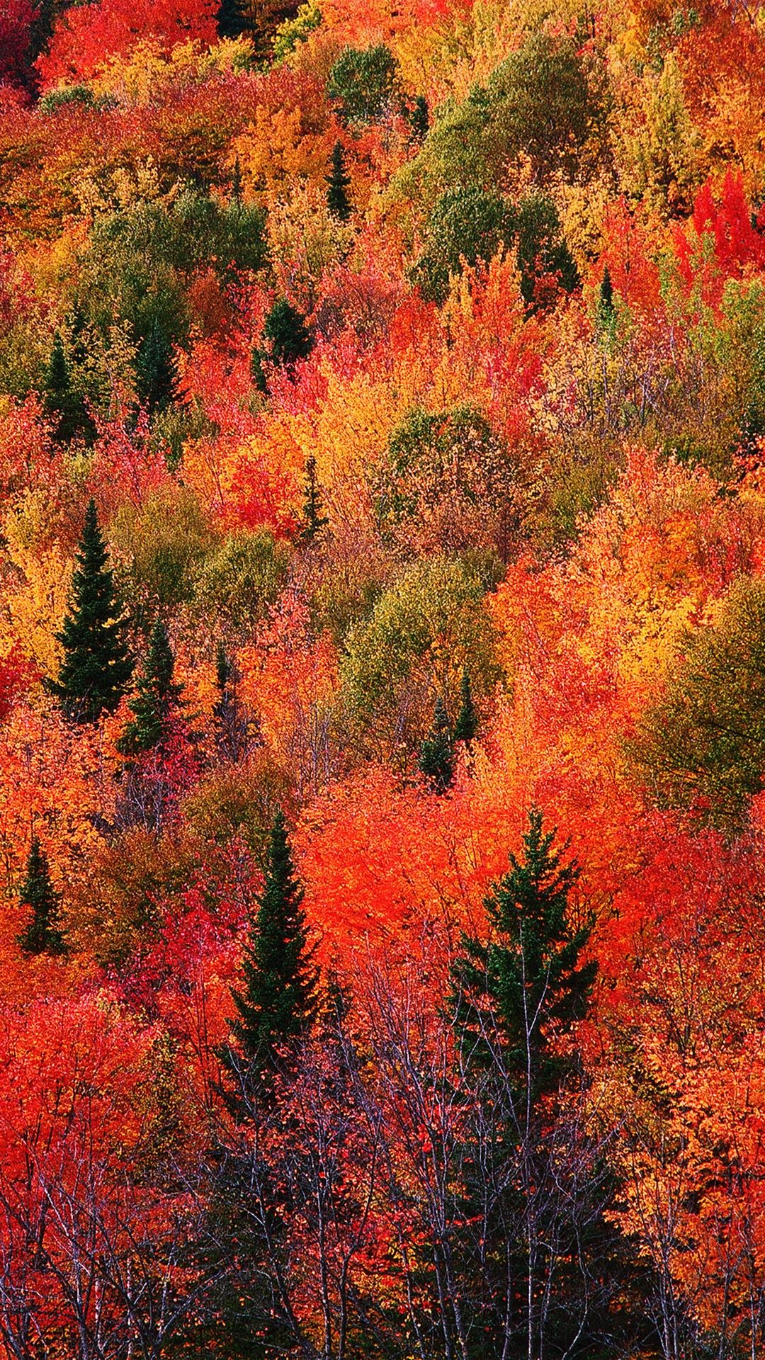 Fall Mountain Red Phone Wallpaper Lockscreen Hd 4k Android Ios Check More At Https Phonewallp Com F Fall Wallpaper Autumn Wallpaper Hd Android Wallpaper Fall