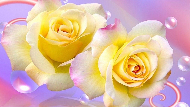 Hd wallpaper yellow rose - Yellow Roses Wallpaper For Desktop
