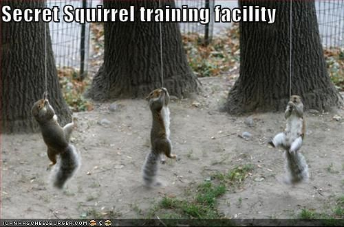 Secret Squirrel Protect Your Nuts Patch: Hehe Here Comes The Future Secret Agents Of The World