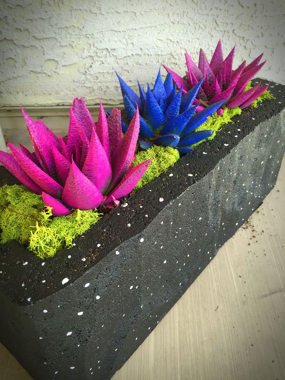 Cosmic Cactus From Home Depot Planted In A Brick Painted Black With Stars Pretty Awesome Purple Martin House Air Plants Plants