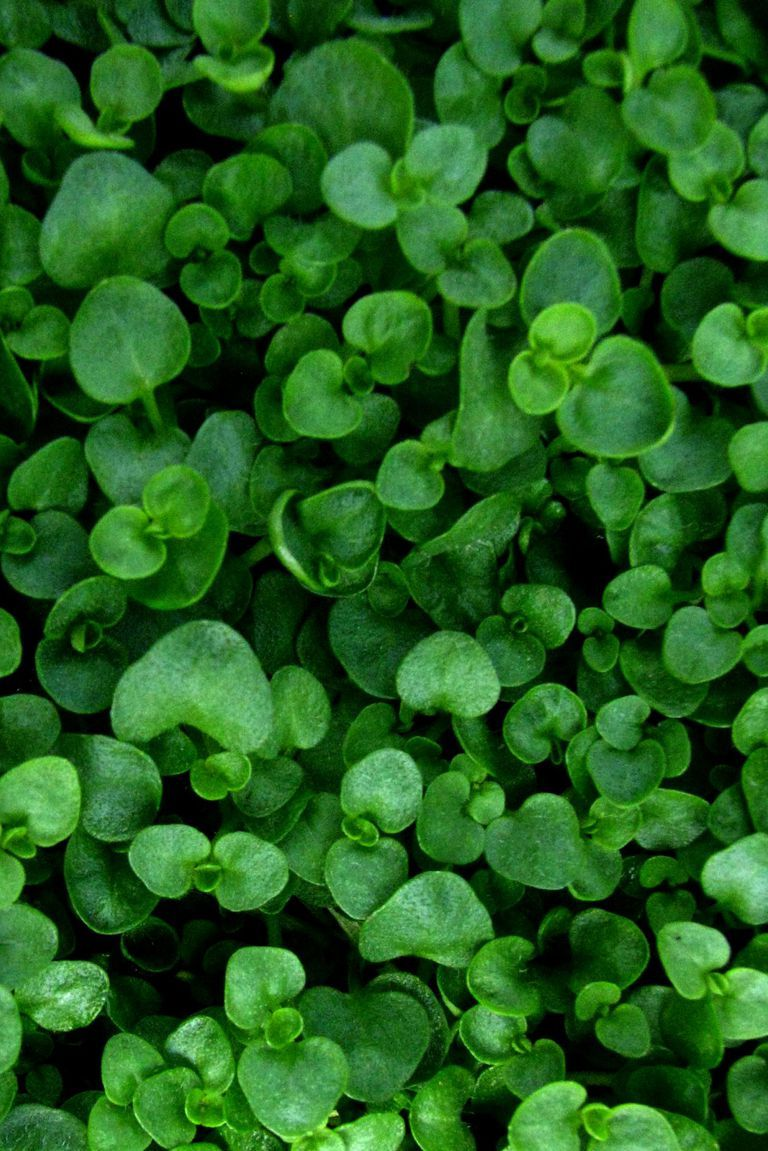 16 Ground Cover Perennials To Try Out In Your Yard This Season Flowers Ornamental Plants And Vines Ground Cover Flowers Ground Cover Plants Shade Best G
