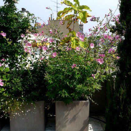 Détail: lavatère et magnolia