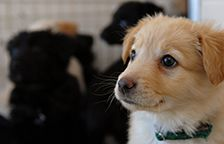 Working to end puppy mills   Resources | Puppy Mills | Best Friends Animal Society