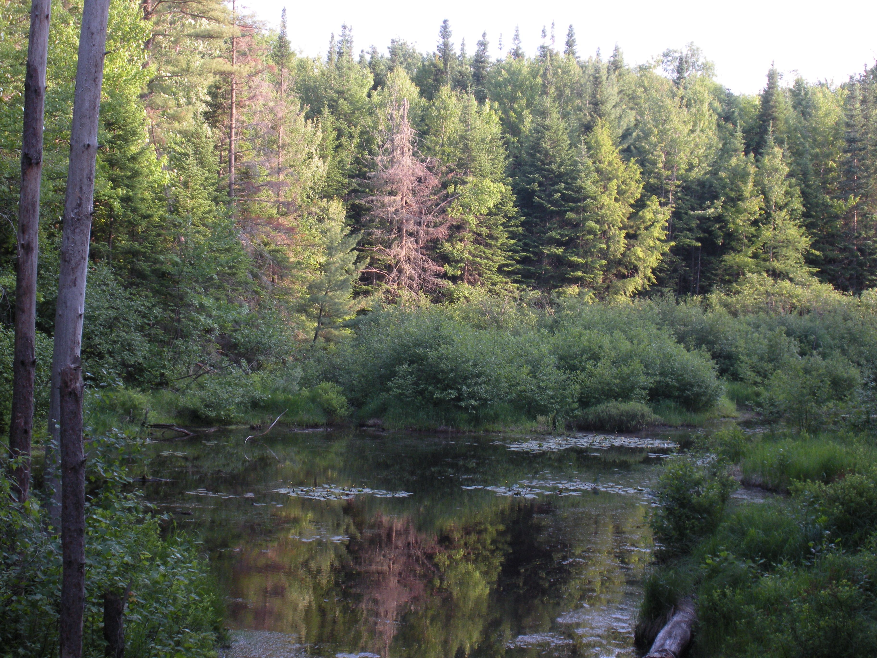Fish Creek Pond Campground in upstate NY. Great place for ...