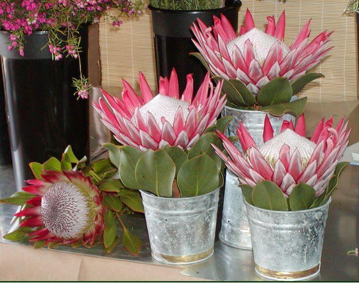 Image Result For Protea Flower Arrangement Ideas Protea Flower Protea Winter Flowers