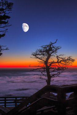 "0ce4n-g0d: "" Lone Cypress by Hilton Chen """