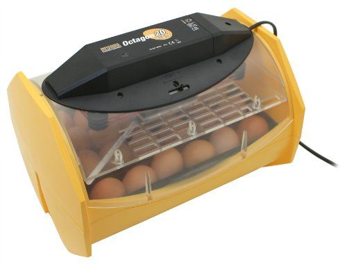 rinsea Products Manual Egg Incubator for Hatching 24 Chicken Eggs or Equivalent | Egg Incubators http://buyeggincubators.com/product/brinsea-products-fully-automatic-egg-incubator-for-hatching-48-chicken-eggs-or-equivalent/
