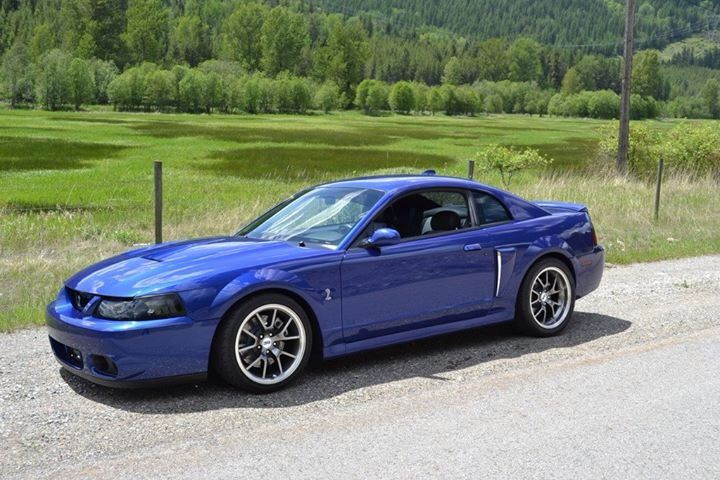 Terminator Ford Mustang