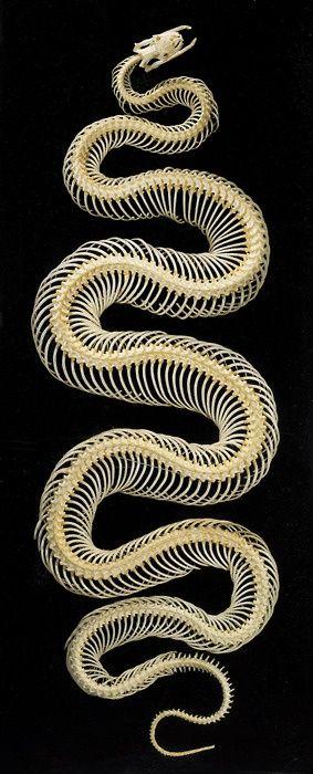 http://ift.tt/2IA5CfR | News | Pinterest | Serpientes, Animales y ...