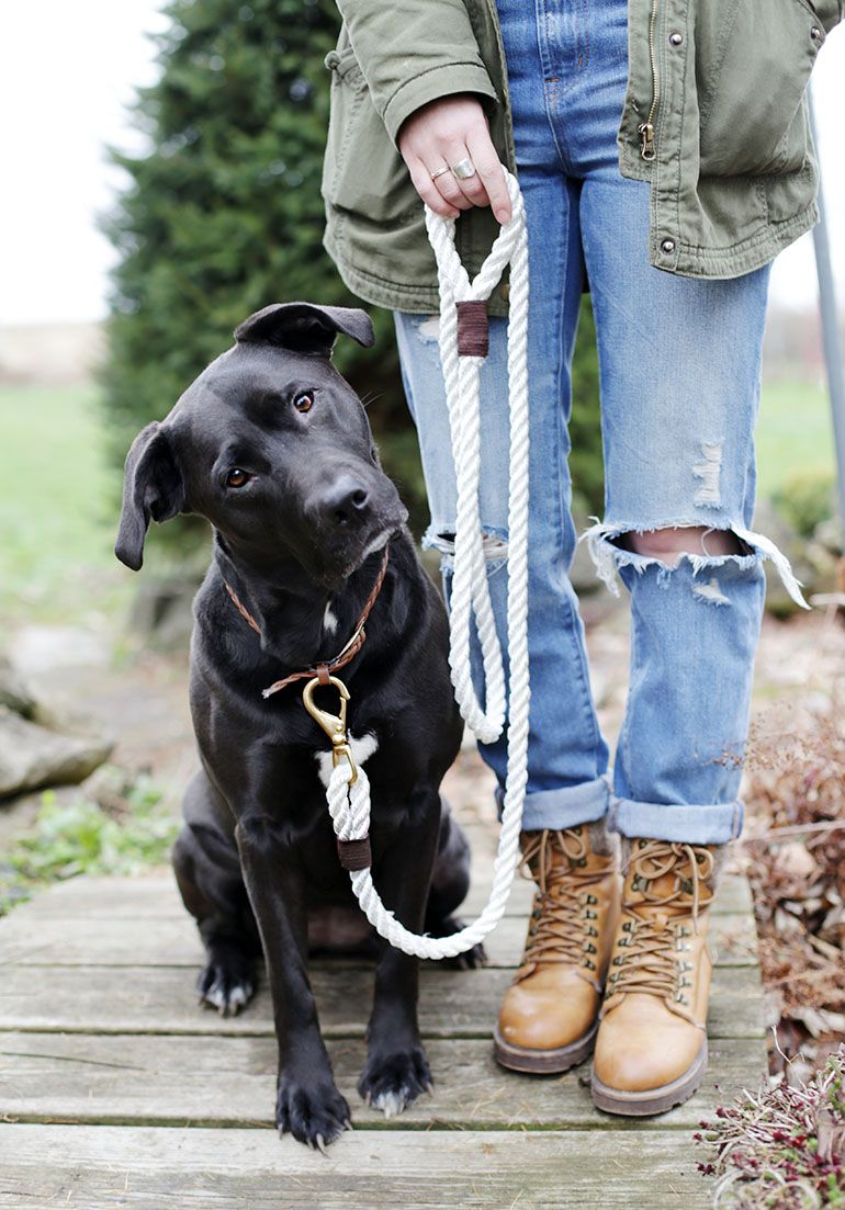 Photo of DIY Rope Dog Leash