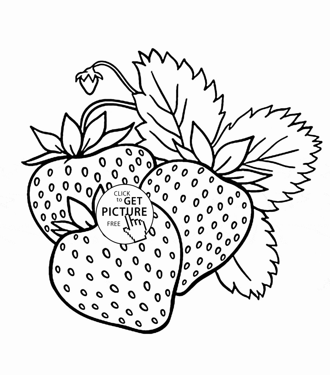 Coloring Pages Of Fruits Lovely Strawberries Drawing at