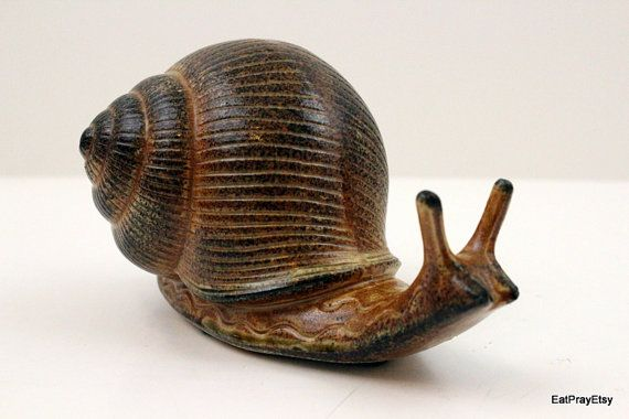 This slow moving little guy would look right at home on the edge of your garden!... Or perhaps on a window sill. Either way he is adorable and