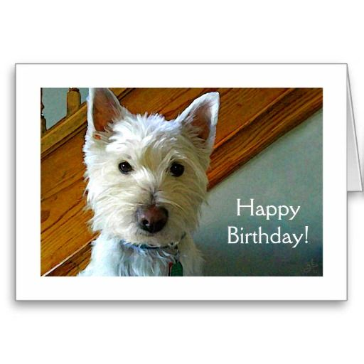 Sale On Westie Dog Is Looking At You Happy Birthday Greeting Cards