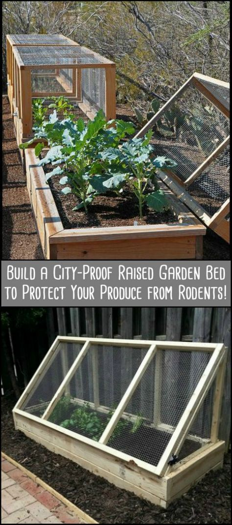 Your Produce from Rodents by Building This City-Proof Raised Garden Bed