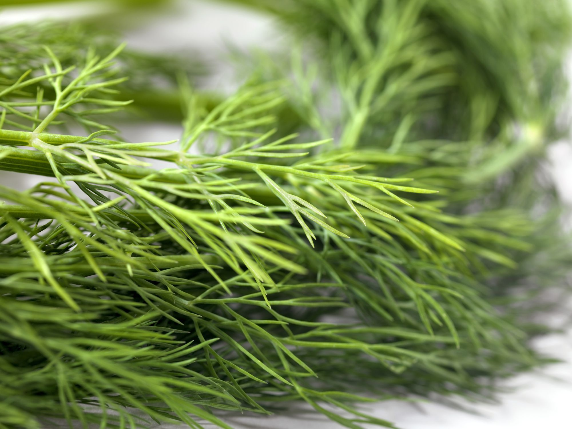Small Crop Of Substitute For Dill