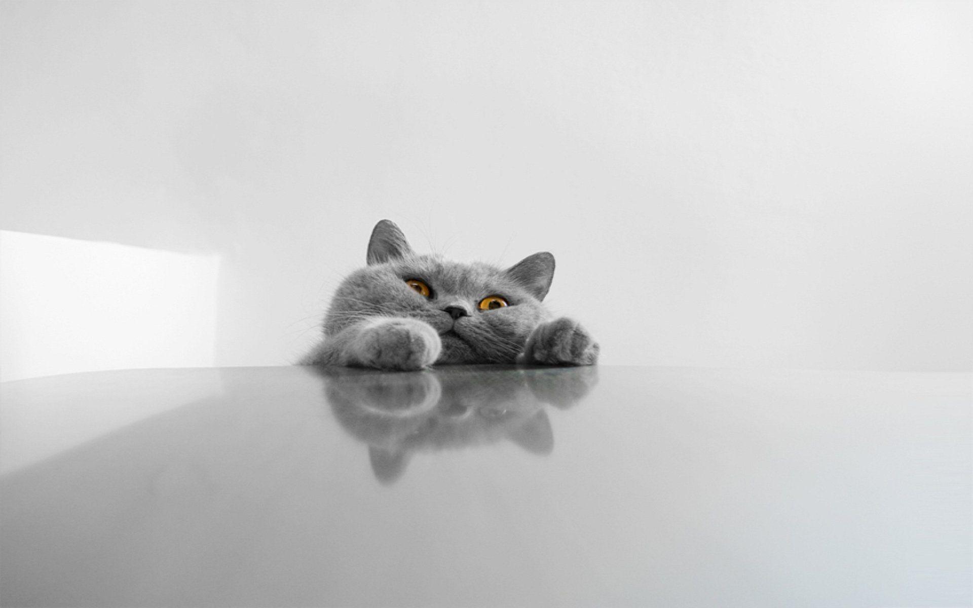 miaauu