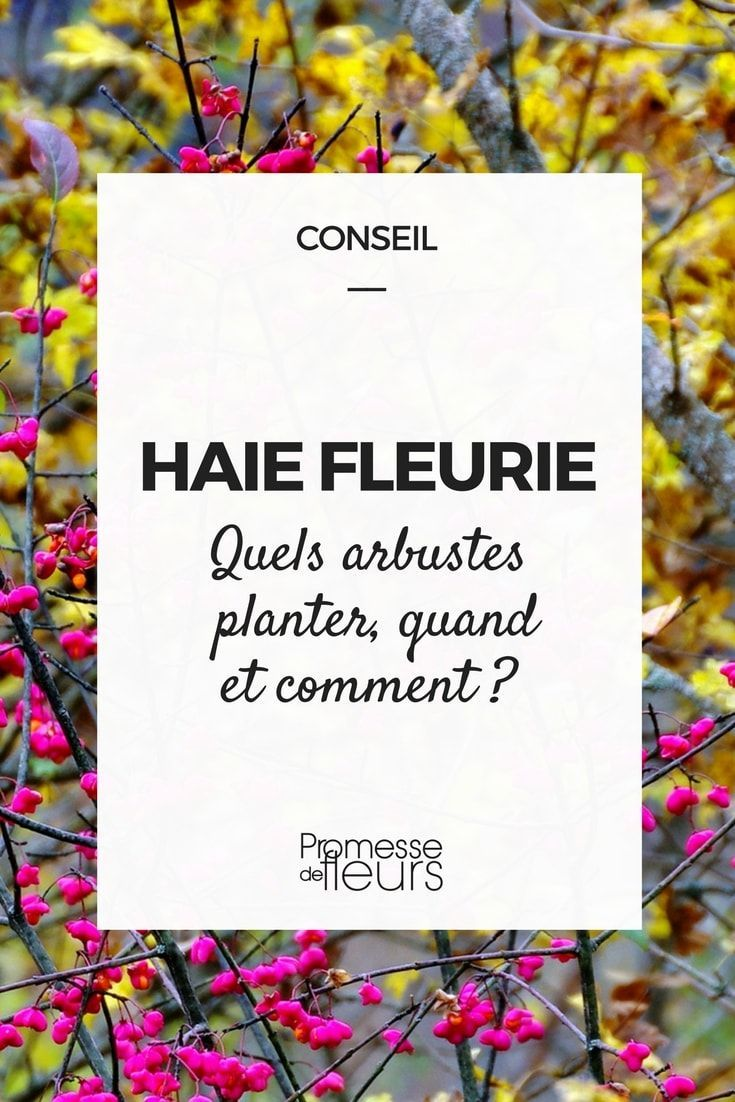 Arbuste Pour Terrain Calcaire haie fleurie : quel arbustes planter, quand et comment
