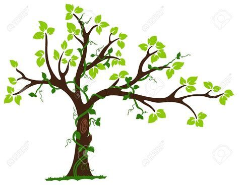 Tree Vine Clipart