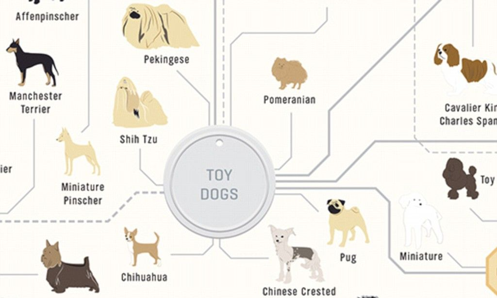 The family tree of DOGS: Chart reveals how every breed's related