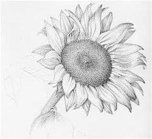 Sunflower Drawings Bing Images Flower Sketch Pencil Flower Sketches Sunflower Drawing