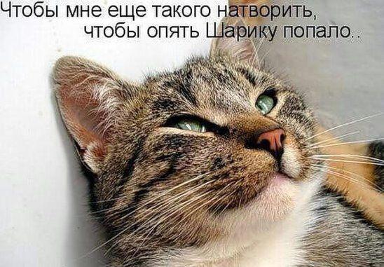 Смешные картинки котов и кошек с надписями смех, больно танцуй картинка
