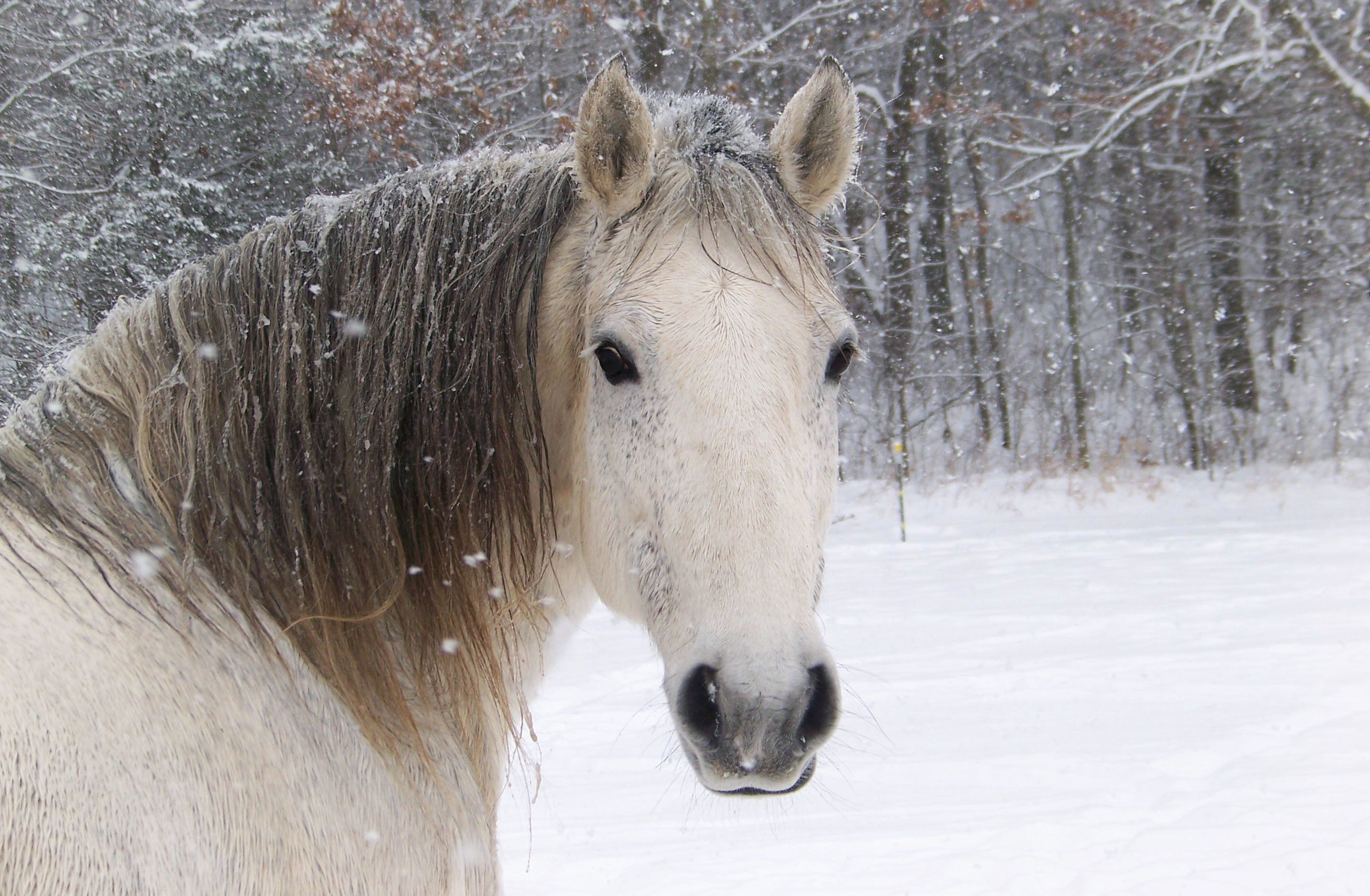 Top Wallpaper Horse Winter - 04e1852b138f23409986066fceedd0ef  Graphic_394274.jpg