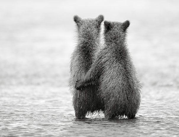 Adorable Photos of Bear Cubs in Russia's Wild East by Nikolai Zinoviev