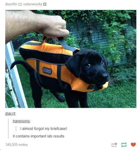 Pin By Auggie Lover On Tumblr Pinterest Animal Humor And Dog