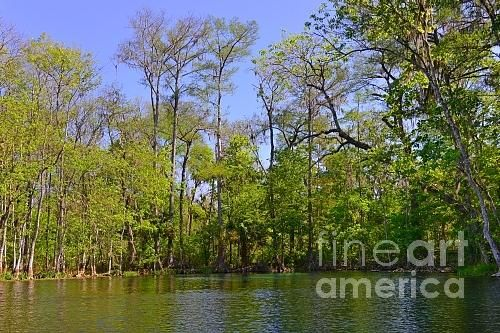 New print available on http://fineartamerica.com/featured/silver-river-florida-christine-till.html - 'Silver River Florida' by Christine Till