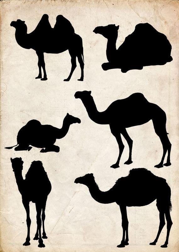 d19d8e23de0 Camel Silhouette
