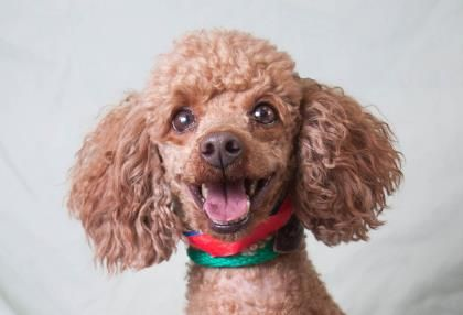 Adopt Baxter A Lovely 6 Years 5 Months Dog Available For Adoption