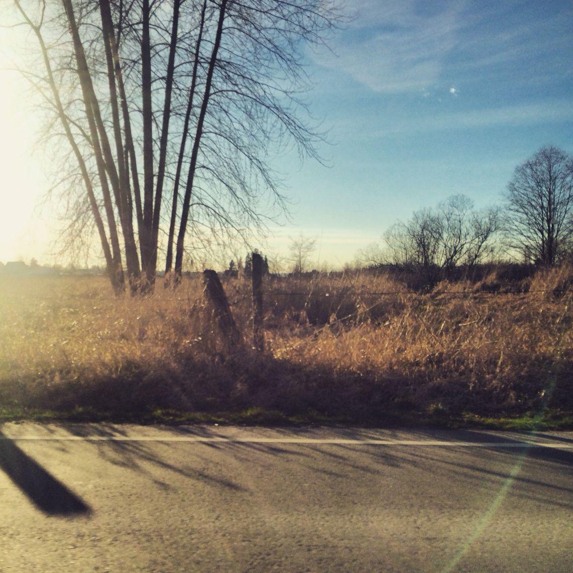 Pitt meadows #bc #pittmeadows