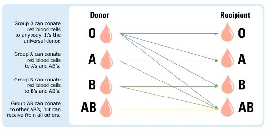 Simple blood type donor diagram from red cross my future blood