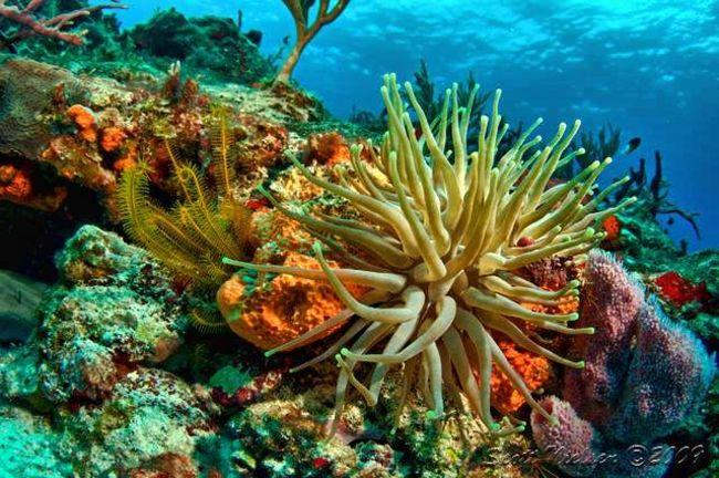 Cozumel Marine National Park  Quintana Roo, Mexico