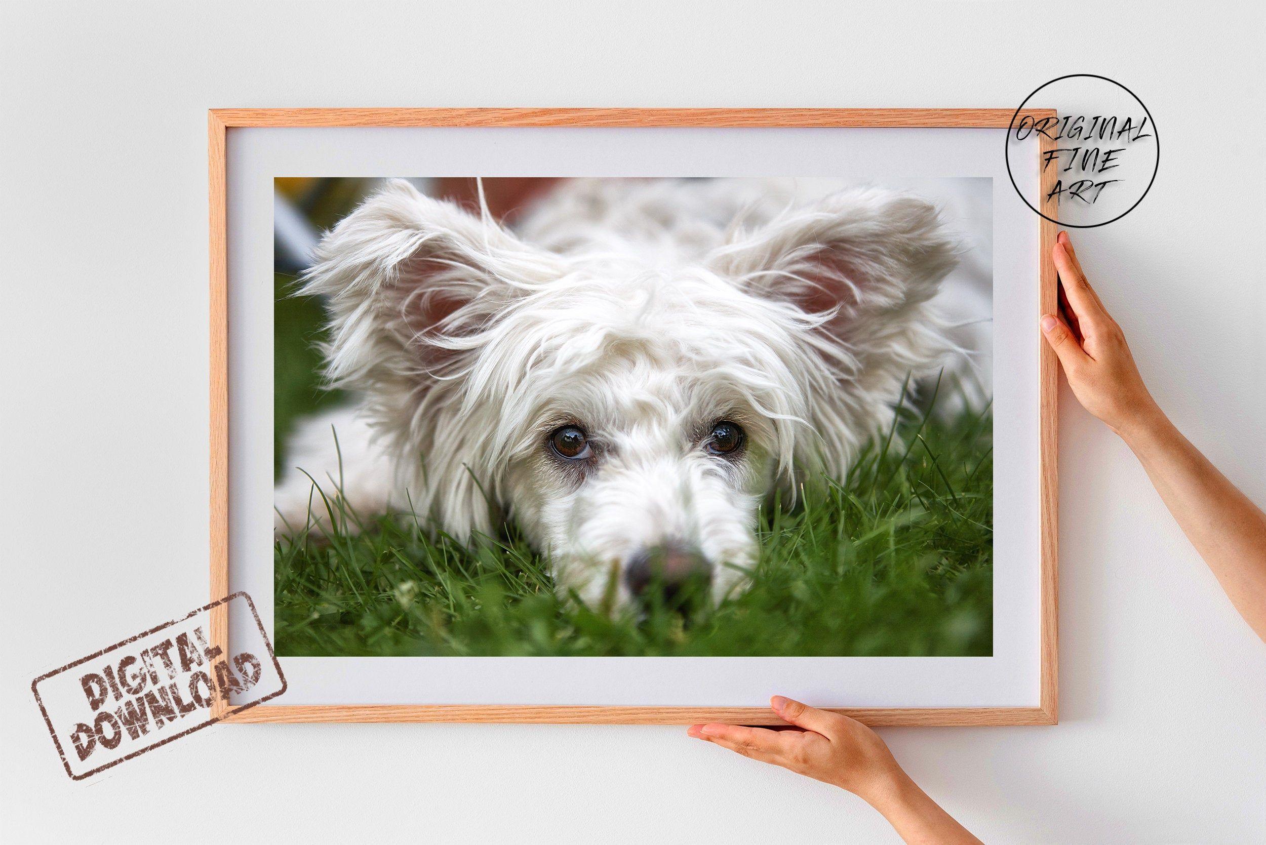 Funny Dog Photo For Children Room Gift For Dog Lover Dog