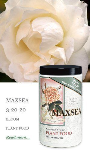 Maxsea 3 20 20 1 5lb Water Soluble Seaweed Plant Food Fertilizer