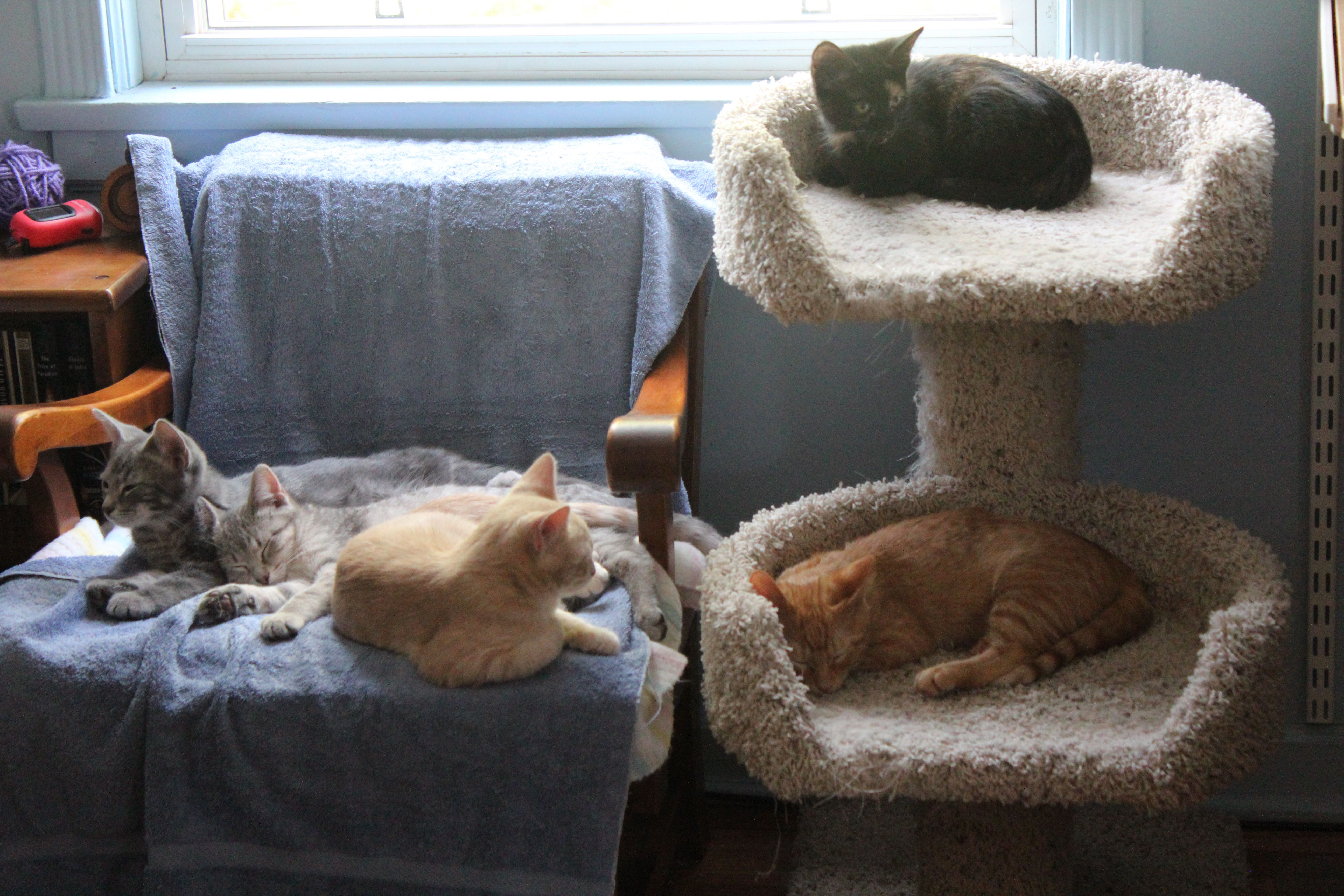 A litter of five, relaxing after a long morning of