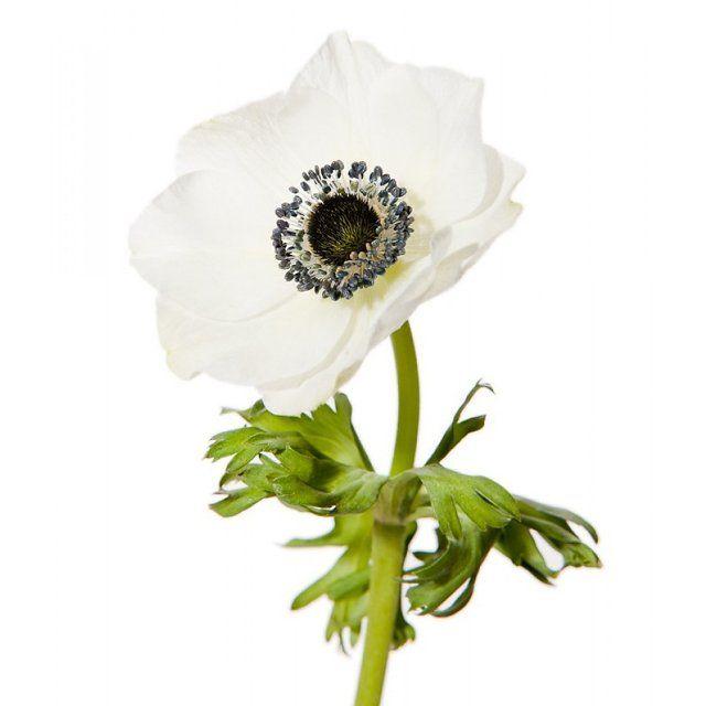 Types Of White Flowers For Weddings: Pinning For Mary-Kate Olsen's Wedding Mood Board