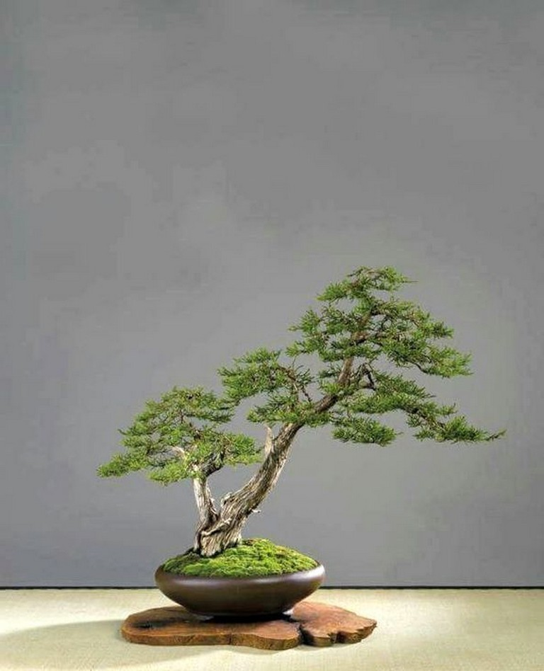 40+ Incredible Bonsai Tree Ideas For Your Garden #bonsaitree #gardendesign #gardenideas #bonsaiplants