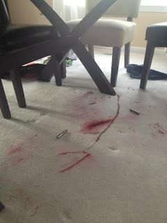 Oops She Did It Again Cleaning Carpet Stains Carpet Cleaning Quote Carpet Cleaning Pet Stains