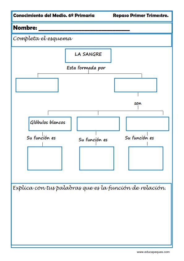 Fichas De Conocimiento Del Medio Sexto De Primaria Mensajes De Educacion Fichas Clases De Ciencias