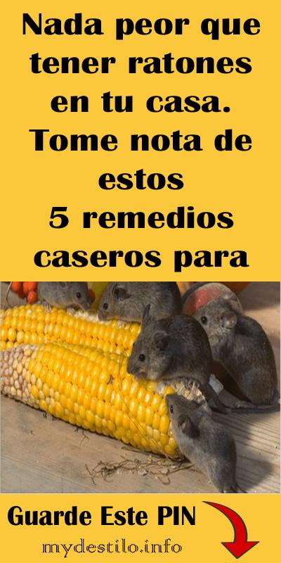 Como Acabar Con Las Ratas En El Campo Nada Peor Que Tener Ratones En Tu Casa Tome Nota De Estos 5