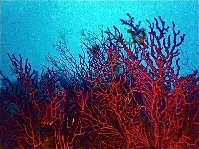 Diy I Cord Coral Embellishment Or Necklace Ocean Art Patterns