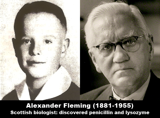 Image result for alexander Fleming young