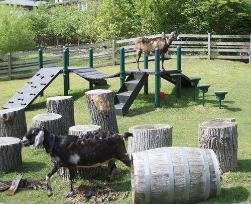Klettergerüst Ziegen : 6a01348134c1a0970c014e89178e85970d 500wi 500×405 pixels goat
