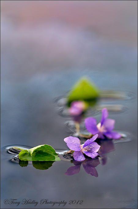 Ogni nostra cognizione, principia dai sentimenti.  Leonardo da Vinci *** my little place    Photo by Tony Hadley ~