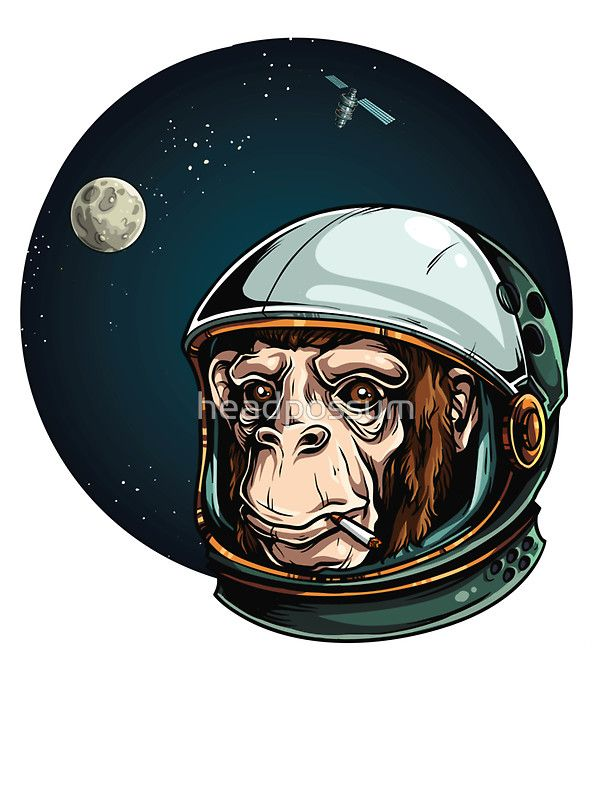 Space Monkey Astronaut Chimp  Stickers by headpossum   Redbubble. Space Monkey Astronaut Chimp  Stickers by headpossum   Redbubble