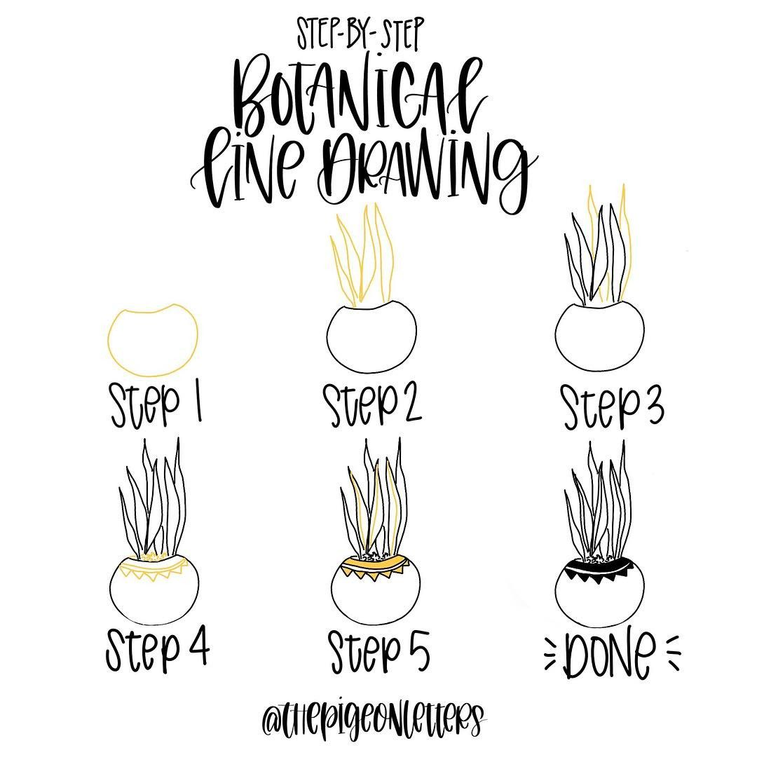 Step-by-step Botanical Drawings | Drawing Tutorials ... - photo#38
