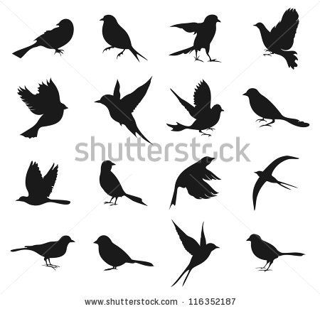 Set Of Silhouettes Of Birds A Vector Illustration By Aleksander1